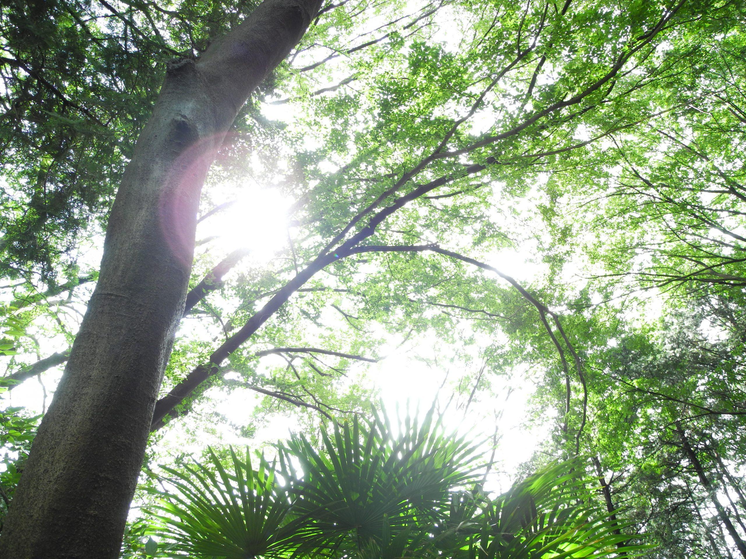 石神井公園の緑