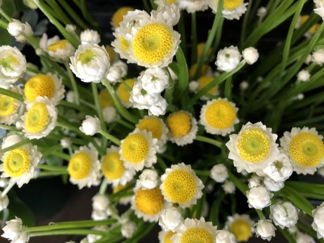 花言葉「ずっと一緒にいたい」 「ずっと友達 」の意味の花は?