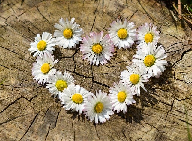 花言葉で「ずっと愛してる」「大好き」の意味を持つ花は?オススメの贈り方も紹介!