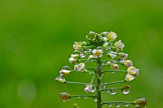 花言葉「ぞっこん」の意味を持つ花は?「あなたに夢中」を伝えたい!